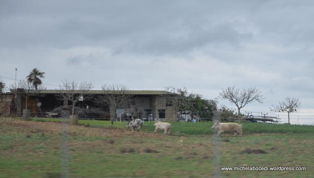 19-PALMA DE MALLORCA 2012 (20)